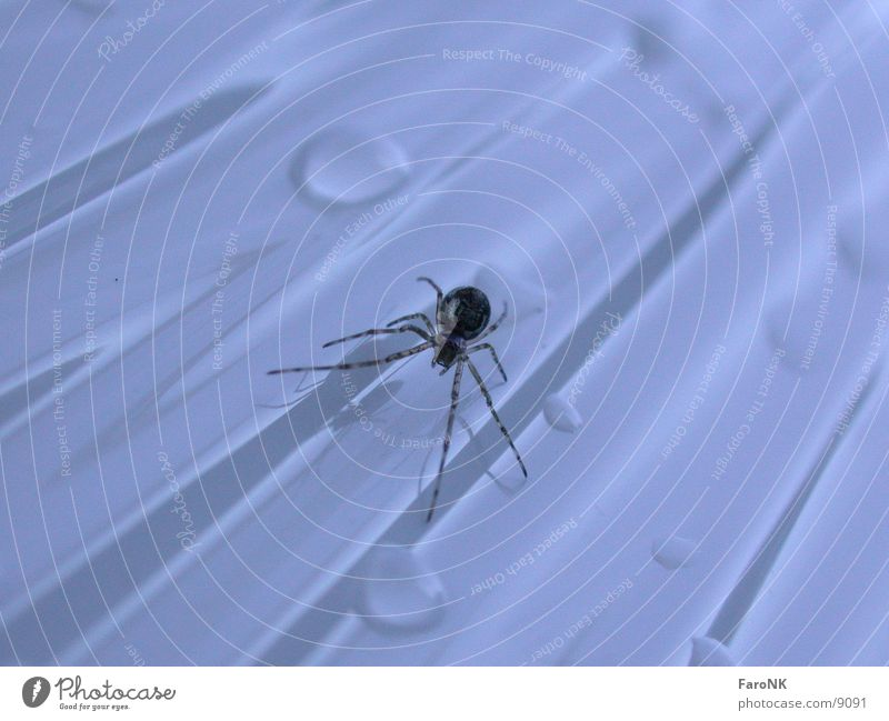 Animal Drops of water Transport Insect Spider