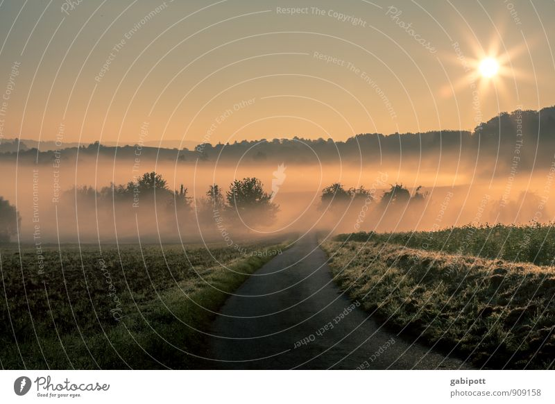 early morning mist Life Harmonious Well-being Contentment Senses Relaxation Calm Meditation Environment Nature Landscape Earth Cloudless sky Sun Sunrise Sunset