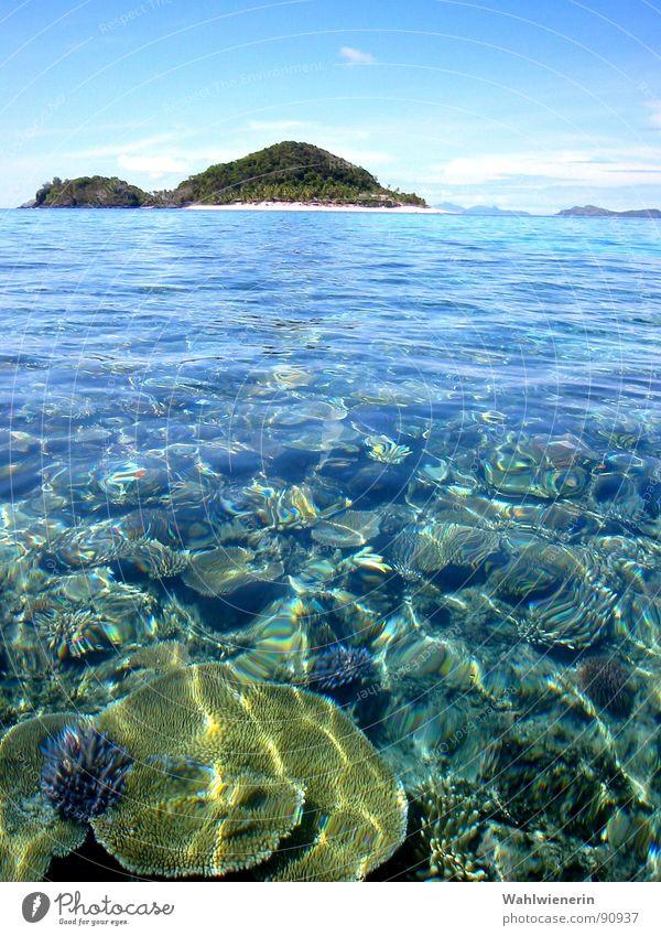 Water Ocean Vacation & Travel Island Dive Underwater photo Coral Animal Fiji Islands