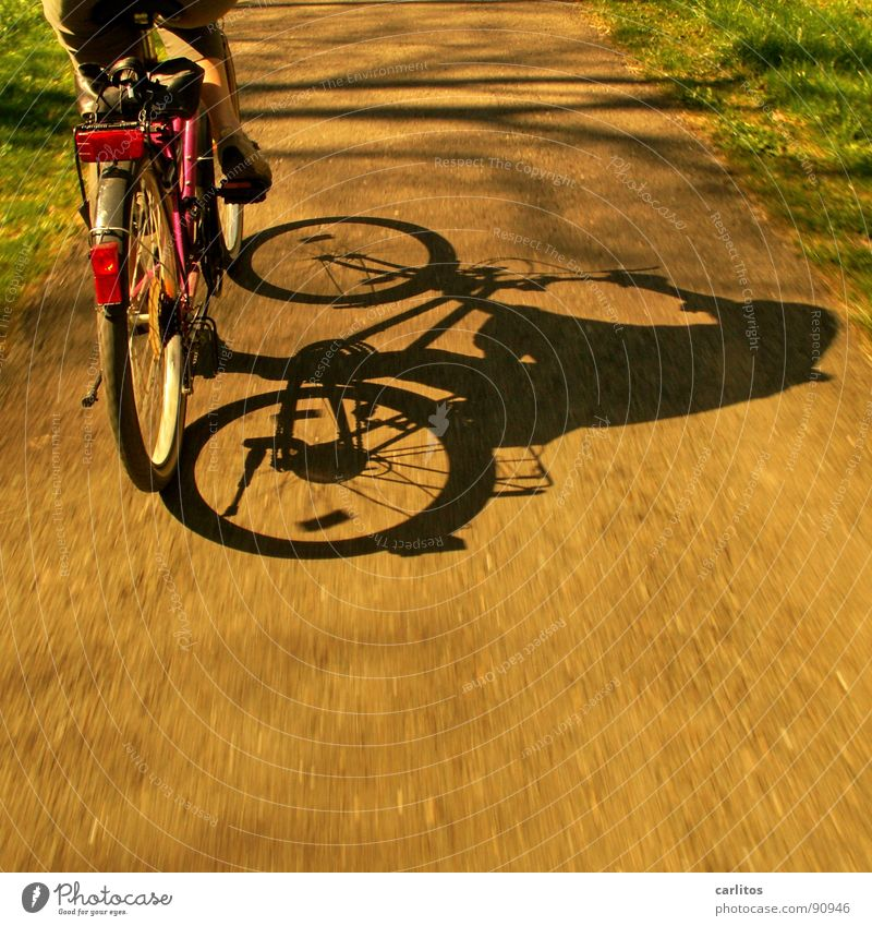 Summer Life Healthy Bicycle Leisure and hobbies Trip Speed Dynamics Cycling In transit Section of image Partially visible Cycle path Cycling tour