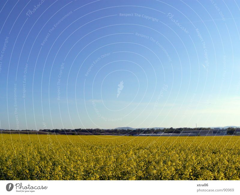 Sky Blue Plant Summer Yellow Far-off places Blossom Spring Warmth Landscape Field Environment Large Horizon Energy industry Physics