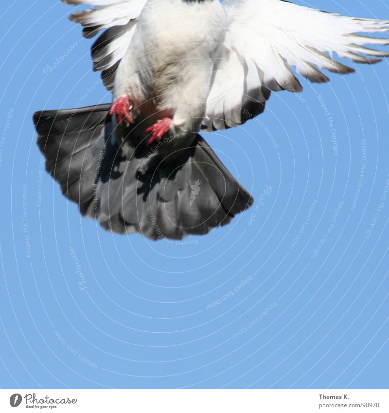 White Beautiful Eyes Gray Flying Dirty Aviation Feather Observe Peace Airport Pigeon Beak Judder Poultry Symbols and metaphors