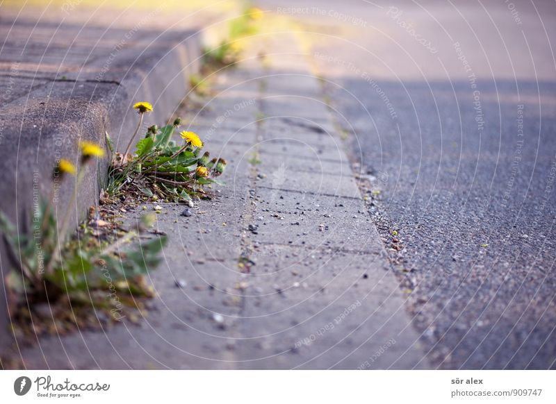 Nature City Plant Beautiful Flower Leaf Environment Yellow Life Street Blossom Gray Growth Power Climate Transience
