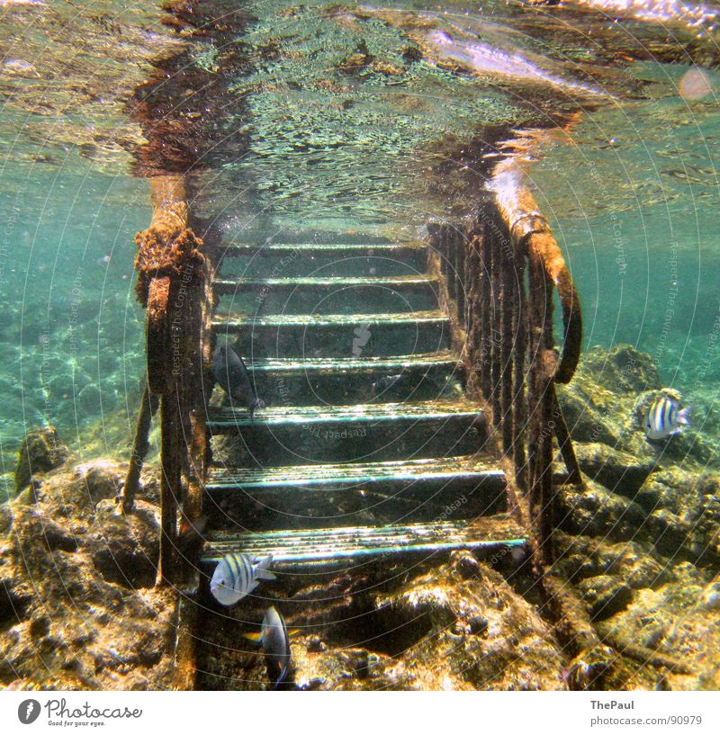 Underwater photo Water Ocean Summer Calm Fish Stairs Concentrate Go up Reef Coral Animal Seasons Overgrown Surface of water Coral reef