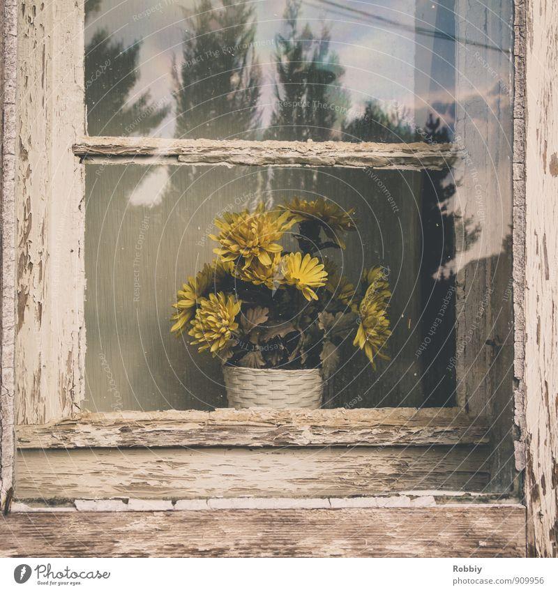 Fleur dans la fenêtre Flower Pot plant Facade Window Old Gloomy Dry Yellow Retro Window pane Plant Forget Past Shriveled Timeless Wood Erosion Transience