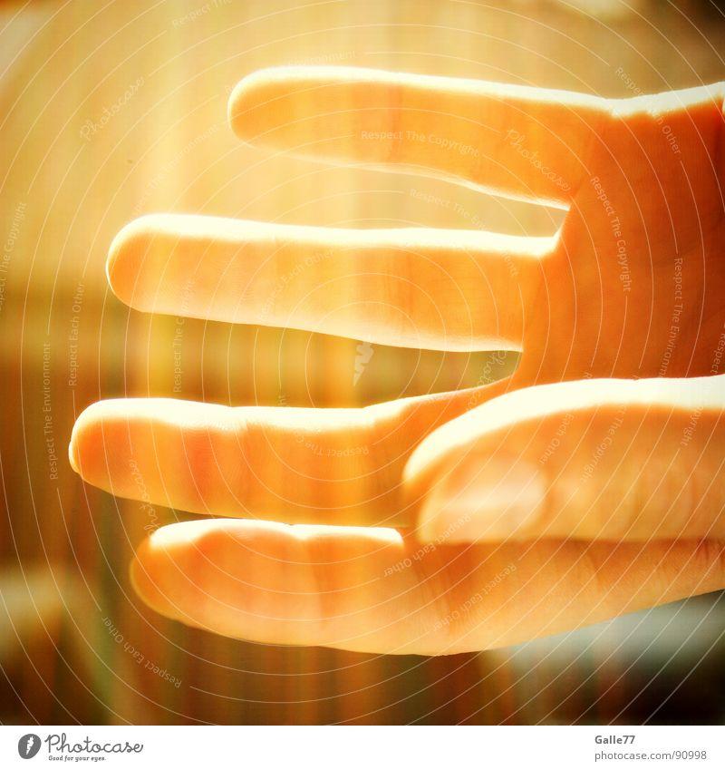 shine Hand Fingers Undo Deities Awareness Glittering Summer Physics Open Observe Lamp Lighting blessing God Might Energy industry Sun Warmth