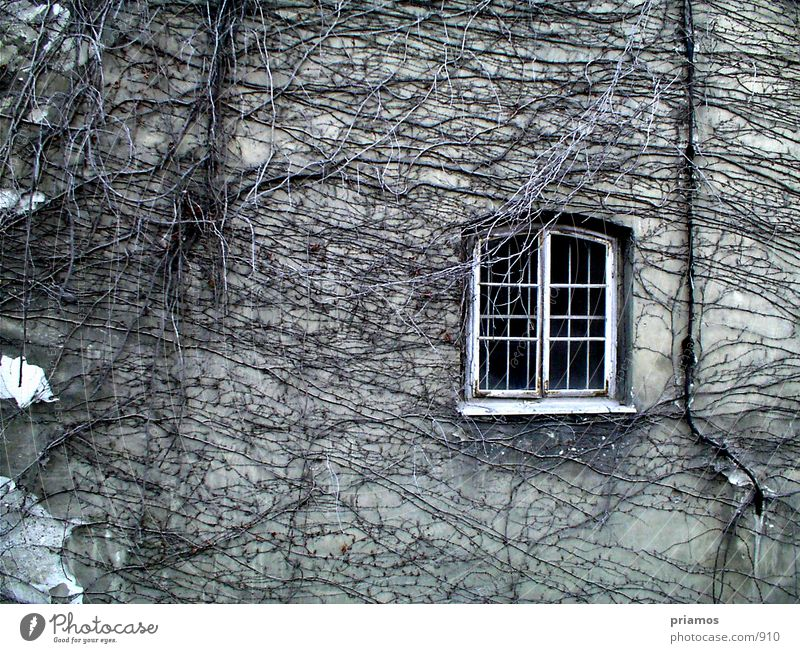 Rapunzel, let your hair down. Window Facade Decline Wall (barrier) Structures and shapes Architecture Old