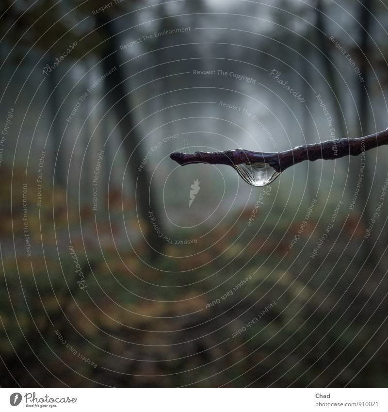 Nature Plant Water Tree Calm Dark Forest Environment Sadness Autumn Moody Dream Fog Hiking Drops of water Trip