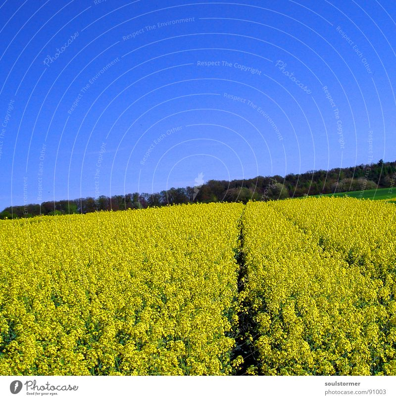 Nature Sky Flower Green Blue Plant Yellow Far-off places Forest Meadow Blossom Spring Field Energy industry Stop Tracks