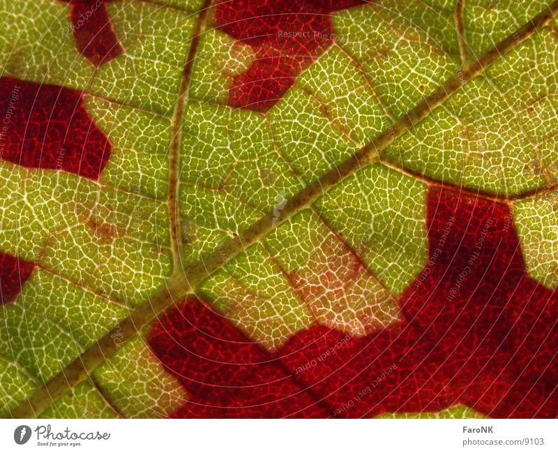 leaf Autumn Leaf Colour