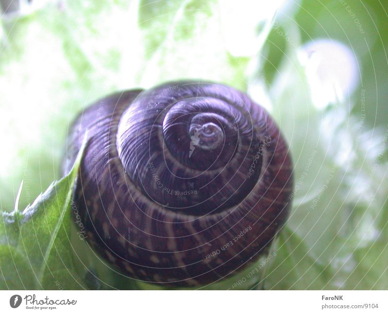 Animal Transport Snail Snail shell