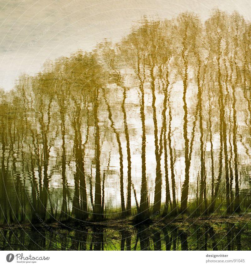Water Tree Lake Waves Image Mirror Surface Self portrait Image (representation) Mirror image Grow hazy