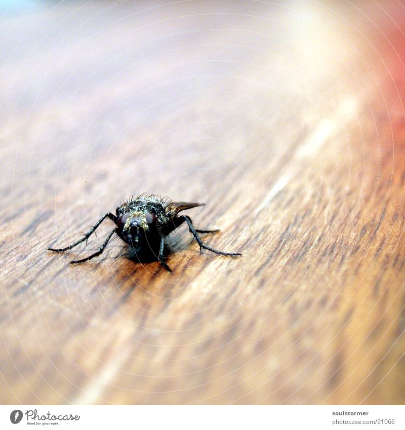 Nature Animal Wood Hair and hairstyles Legs Brown Wait Fly Speed Sit Table Wing Insect Square Depth of field Snapshot