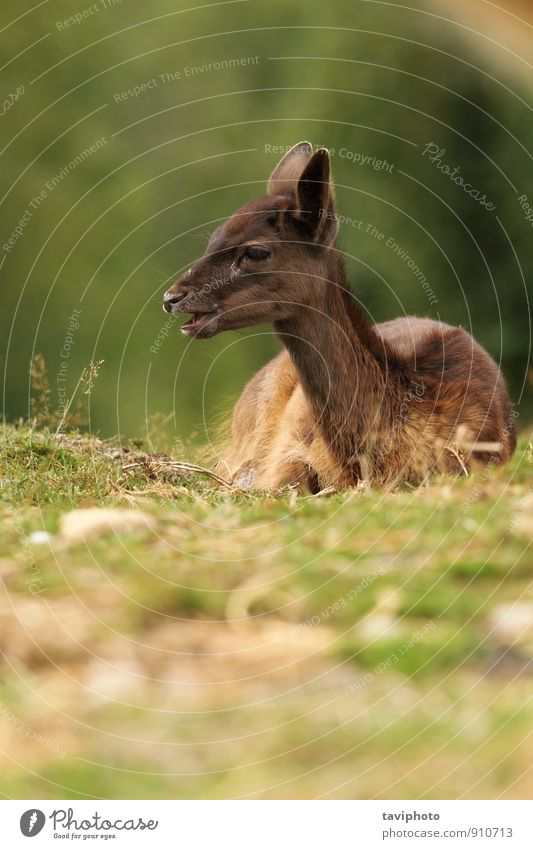 dark fallow deer calf Nature Beautiful Green Landscape Animal Dark Forest Face Autumn Grass Natural Brown Park Wild Baby Photography