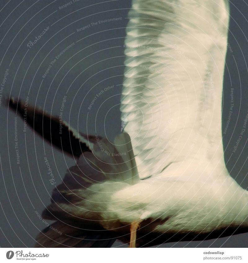 Lanes & trails Bird Fear Going Flying Dangerous Panic Animal Black-headed gull