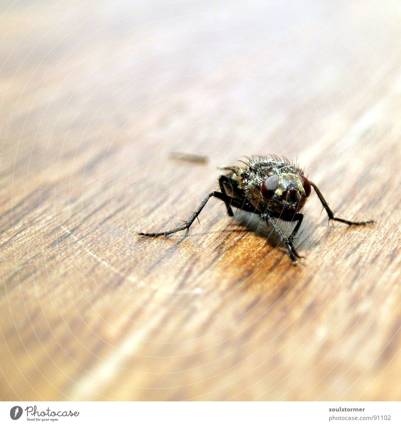 Nature White Animal Black Eyes Wood Hair and hairstyles Legs Brown Sit Walking Wait Fly Speed Table Wing