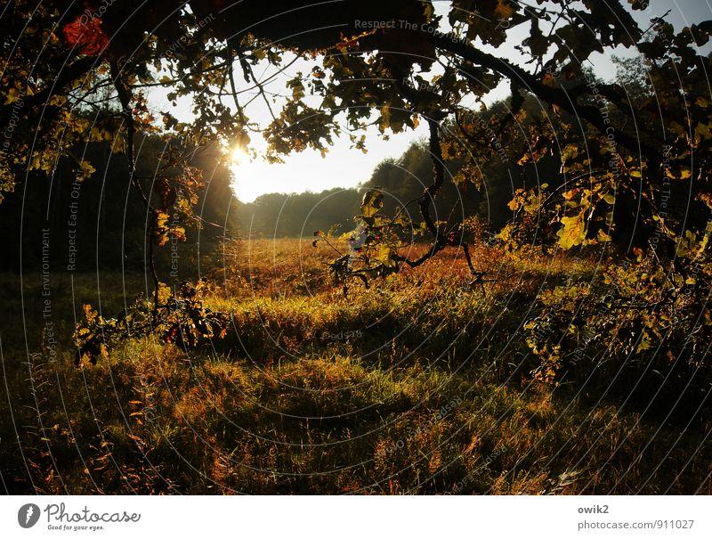 Sky Nature Plant Tree Landscape Calm Far-off places Environment Autumn Meadow Grass Bright Horizon Weather Idyll Illuminate