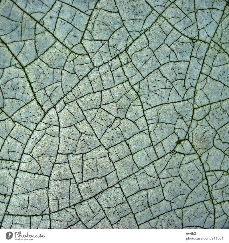 dry season Plastic Old Dry Calm Decline Transience Destruction Pore To dry up Line Crack & Rip & Tear Part Fragment Colour Ravages of time Derelict fragments