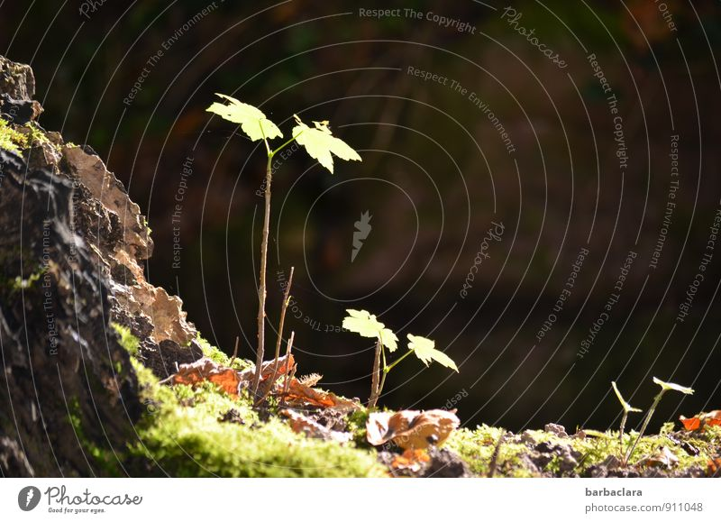 Nature Plant Green Landscape Leaf Dark Environment Life Autumn Grass Small Bright Together Park Growth Earth