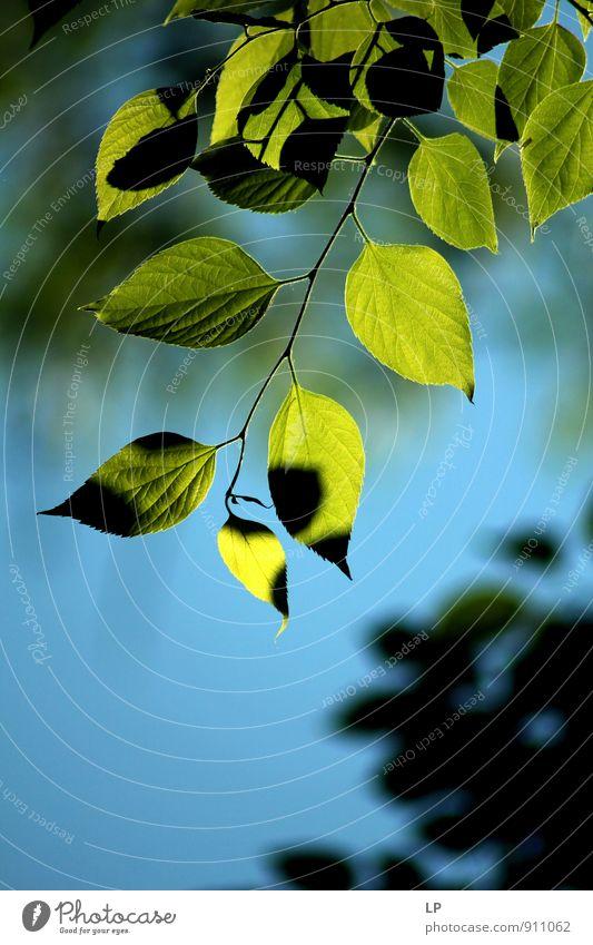 TM Nature Blue Plant Green Landscape Leaf Environment Garden Park Foliage plant Peaceful