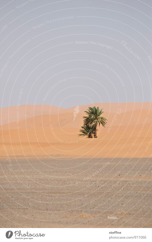 Nature Tree Environment Sand Growth Climate Desert Palm tree Ecological Oxygen Oasis Morocco