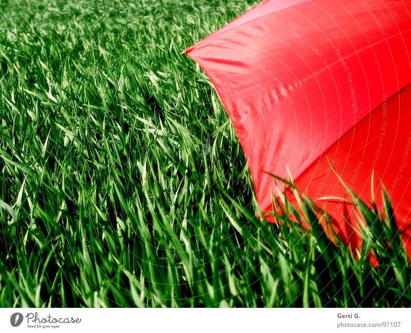 Green Red Summer Joy Movement Wind Field Fresh Protection Agriculture Umbrella Hide Grain Sunshade Blade of grass Cornfield