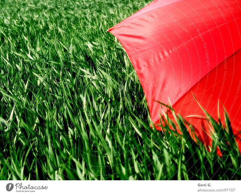 screened Charming Sunshade Protective equipment Umbrella Red Summer Field Cornfield Fresh Multicoloured Greeny-red Agriculture Wind Blade of grass Movement