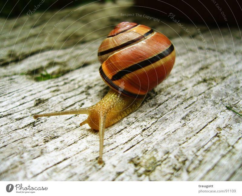 snail Slimy Slowly Animal Snail shell Break Nature Macro (Extreme close-up)