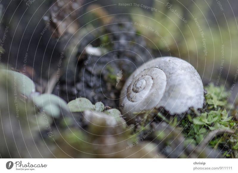 Nature Old Plant Green Loneliness Leaf Animal Environment Grass Death Gray Lie Wild animal Broken Grief Decline