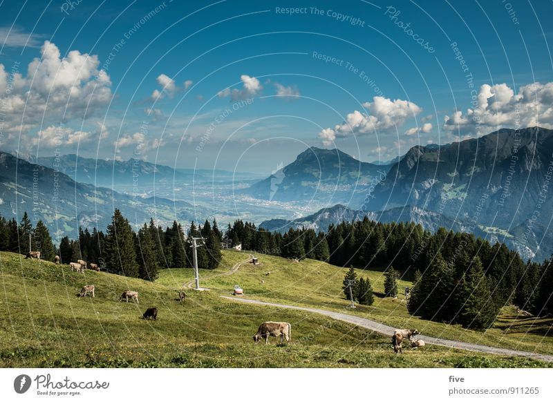 St. Gallen Rhine Valley II Environment Nature Landscape Plant Animal Earth Sky Clouds Tree Meadow Field Forest Hill Rock Alps Mountain Peak Cow Group of animals