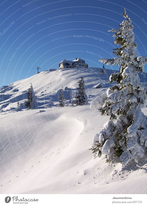 White Tree Winter Loneliness House (Residential Structure) Cold Snow Mountain Wet Tall Individual Events Effort Mountaineering Slope Endurance