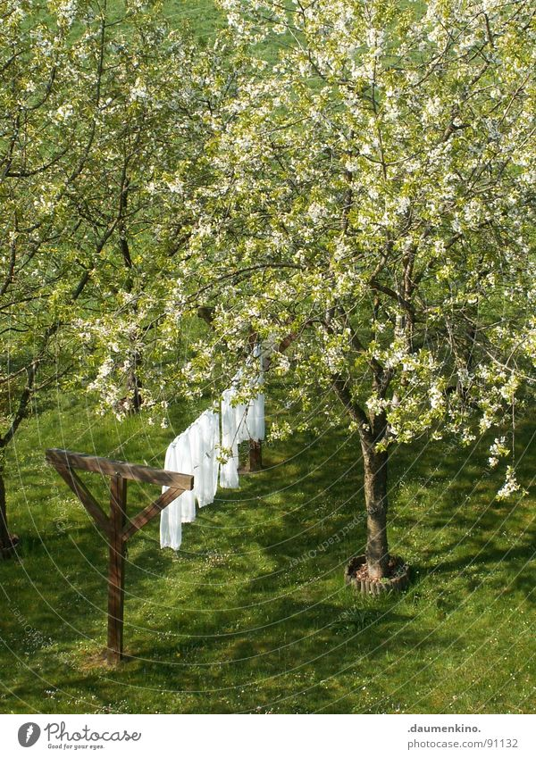 Nature White Tree Calm Leaf Meadow Blossom Spring Garden Wood Wind Pure Cloth Tree trunk Smooth Laundry