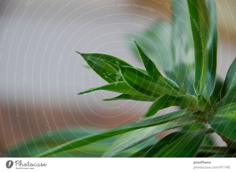 juicy green Plant Exotic Palm tree Small Juicy Green Colour photo Interior shot Palm frond Foliage plant Detail Section of image Partially visible