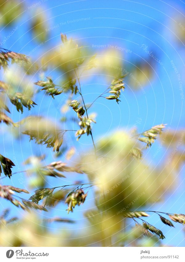 Sky Nature Blue Green Beautiful Plant Summer Meadow Grass Spring Flying Growth Blossoming Pollen Release