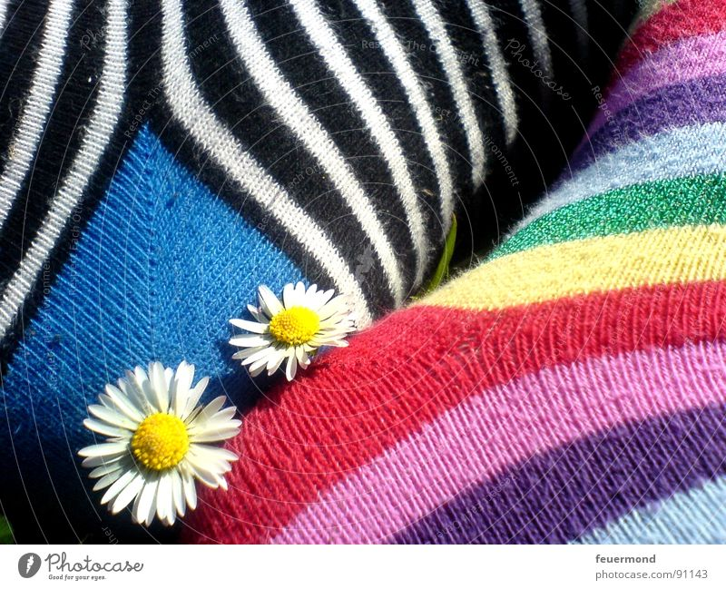 Summer Feet Friendship 2 Together In pairs Stripe Touch Stockings Relationship Daisy Striped Clown Acrobat Affection Plant