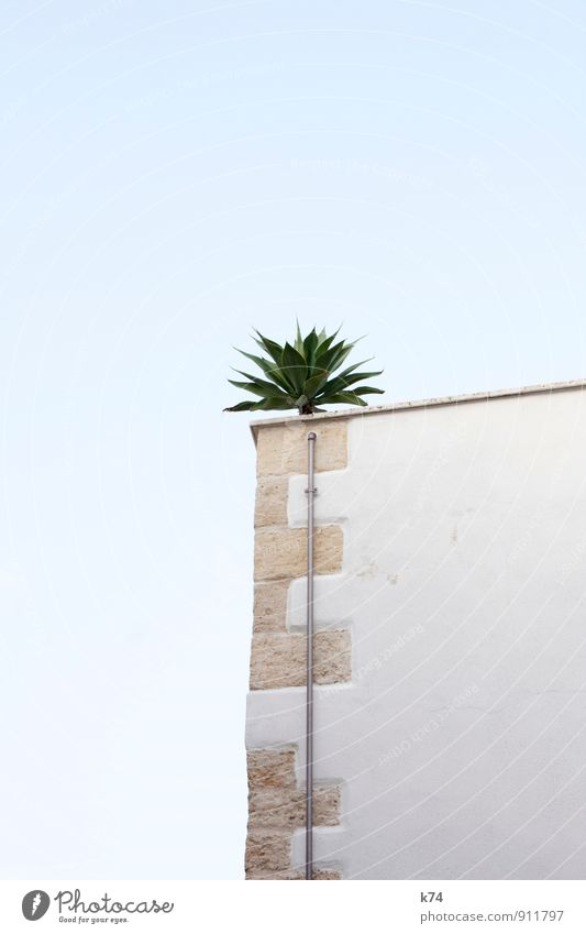 Sky Blue Plant White Summer Loneliness Leaf House (Residential Structure) Wall (building) Wall (barrier) Building Stone Exceptional Above Contentment Corner