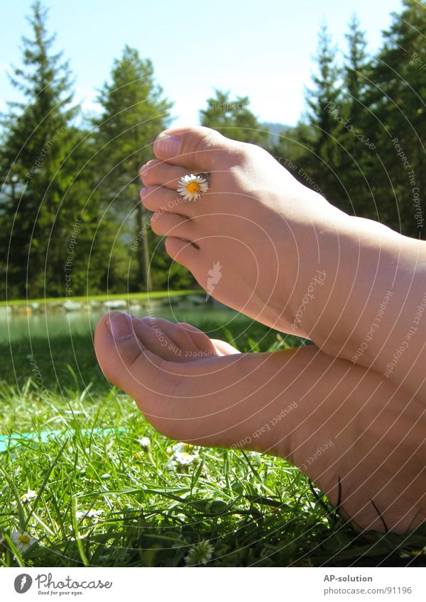 Feet with daisies Toes Toenail Daisy Summery 2 Shoe sole Graceful Delicate Physics Woman Feminine Forest Lake Meadow Grass Green Skin color Spring Well-being