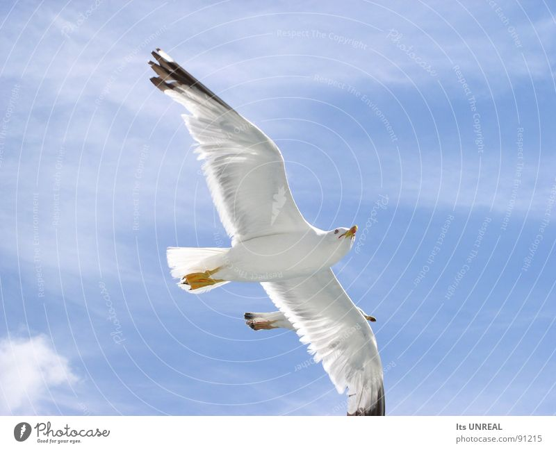 Extreme close-up of two flying birds Bird Clouds Near Large White Blue Summer Sky Contrast Feather Aviation