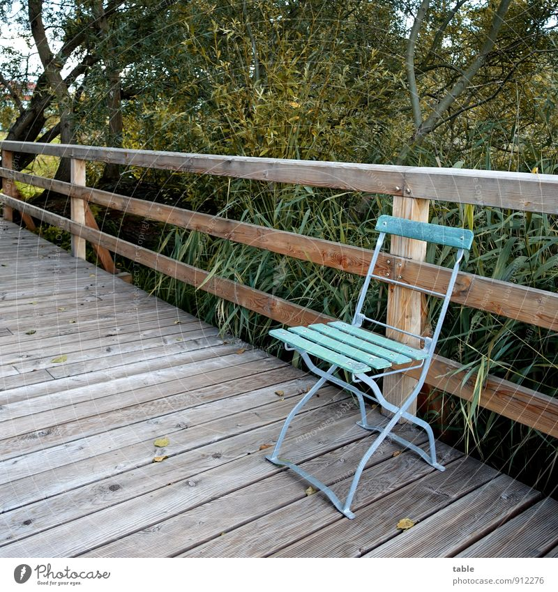 Chair on bridge to water Vacation & Travel Trip Environment Nature Landscape Plant Spring Summer Autumn Beautiful weather Tree Bushes Lakeside Common Reed