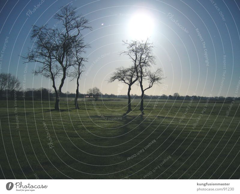 Tree Winter Dark Meadow Grass Landscape Moon Night shot Lower Saxony Werewolf