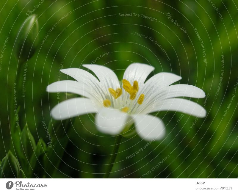 White Green Yellow Spring Blossom Star (Symbol) Pollen