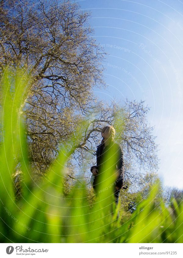 Woman Nature Sky Tree Grass Observe Mysterious Hiding place