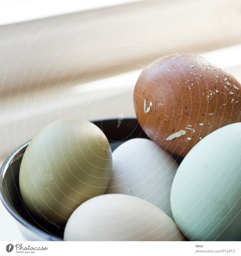 country eggs Food Organic produce Bowl Round Safety Protection Beginning Egg Organic farming Selection Sheath Eggshell Multicoloured Colour photo Deserted