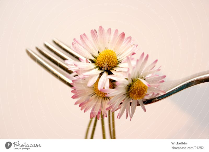 Nature Summer Flower Meadow Spring Healthy Nutrition Wellness Cutlery Gastronomy Bee Appetite Delicious Restaurant Organic produce Daisy