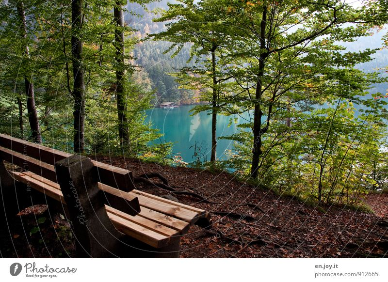 Nature Vacation & Travel Blue Green Tree Relaxation Loneliness Landscape Calm Forest Autumn Lake Brown Idyll Tourism Trip