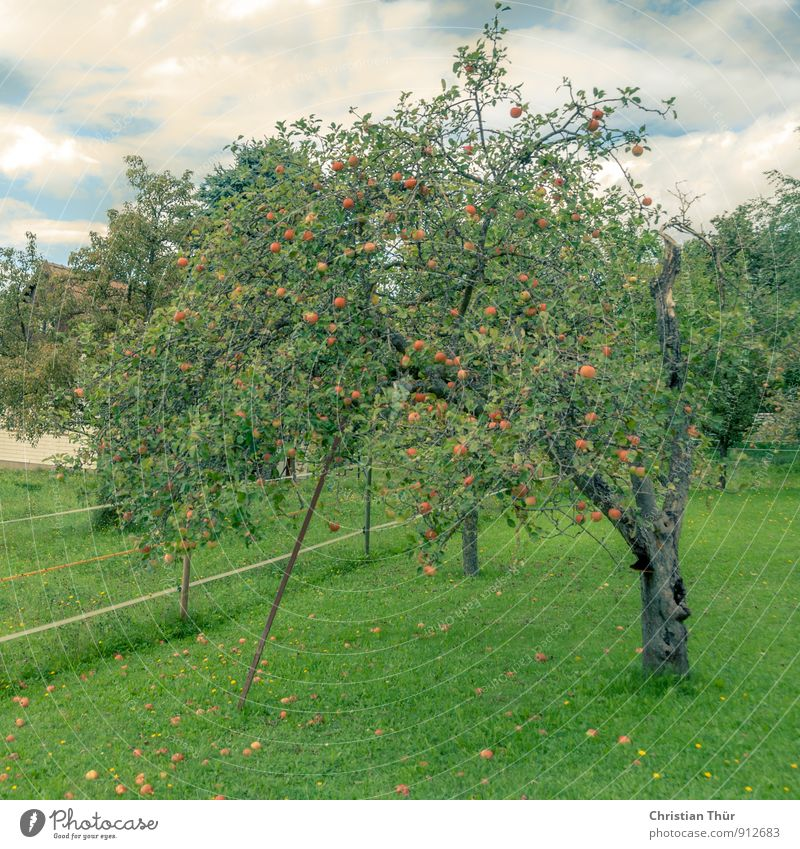 apple harvest Healthy Health care Wellness Life Harmonious Well-being Relaxation Vacation & Travel Trip Summer Clouds Beautiful weather Tree Apple tree Meadow