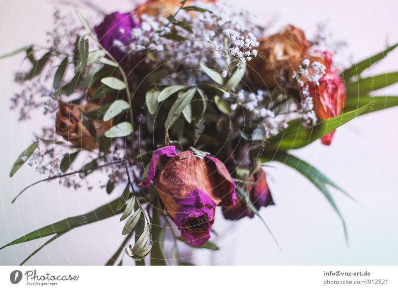 bouquet Plant Flower Leaf Blossom To dry up Limp Bouquet Rose leaves Gift Colour photo Interior shot Close-up Deserted
