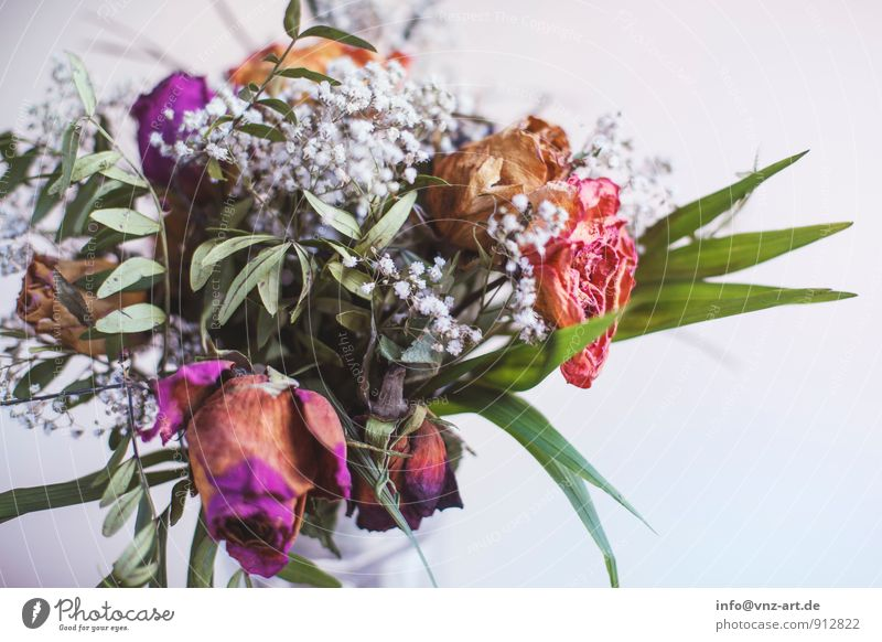 flower Plant Flower Leaf Blossom To dry up Limp Bouquet Rose leaves Gift Colour photo Interior shot Close-up Deserted Copy Space right