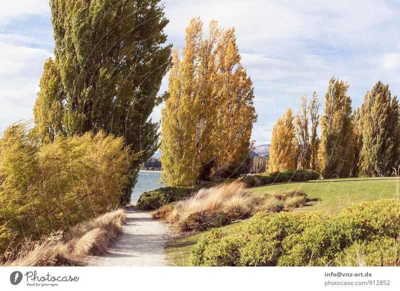 autumn day Environment Nature Landscape Plant Animal Water Sky Autumn Weather Beautiful weather Tree Grass Garden Park Meadow Lakeside River bank Warmth Yellow