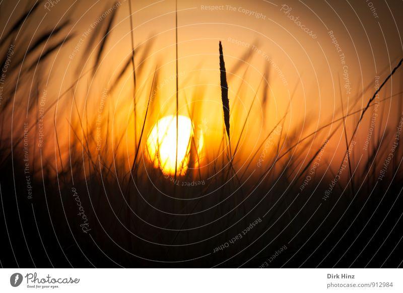 sunset Nature Landscape Sun Sunrise Sunset Sunlight Beautiful weather Grass Meadow Warmth Joie de vivre (Vitality) Warm-heartedness Romance Loneliness End